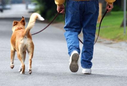 ocio paseo perro