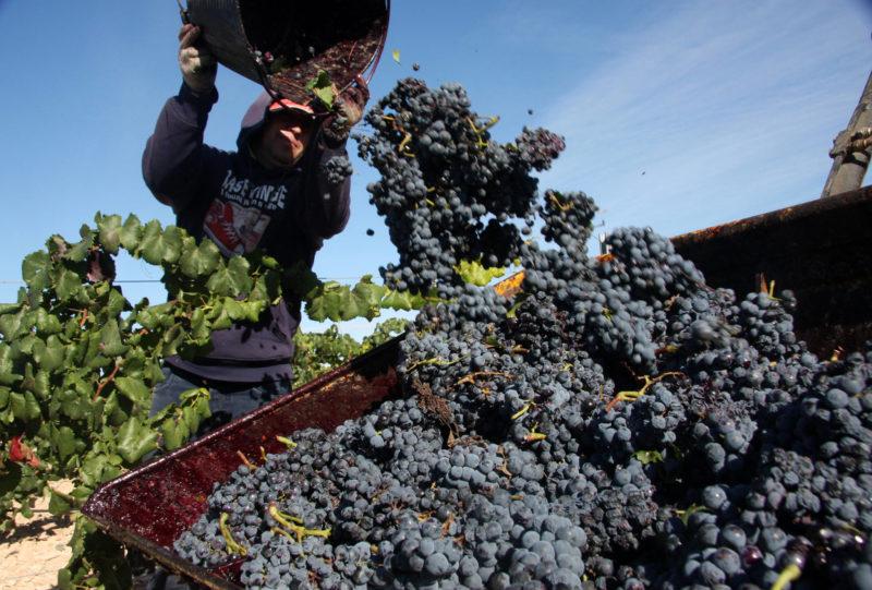 vendimia vino exportación