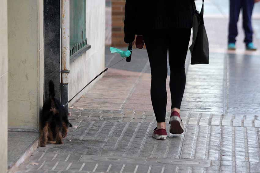 perros excrementos vacunación rabia