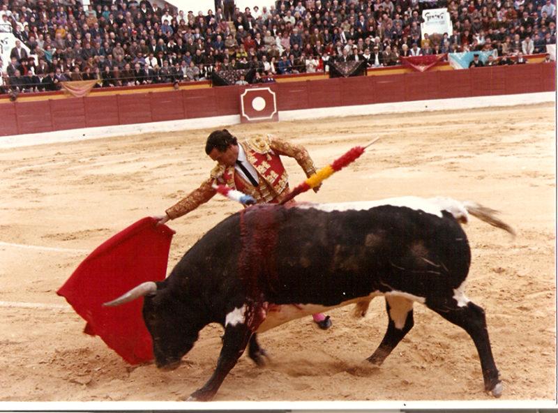 toros torero