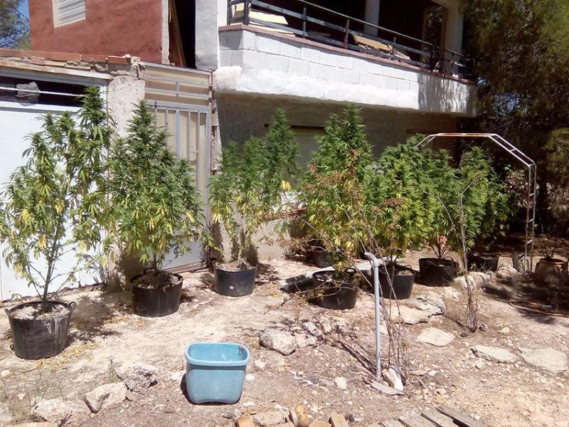 marihuana atalayas