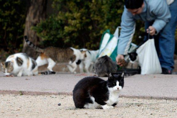 gatos spandy