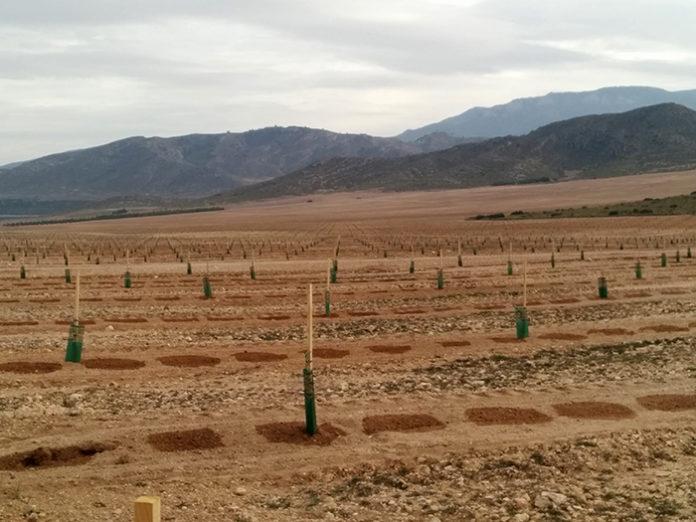 cultivos regadío conversión