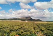 Brócoli cultivo intensivo educación ambiental