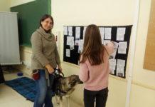 Clases perro Azorín