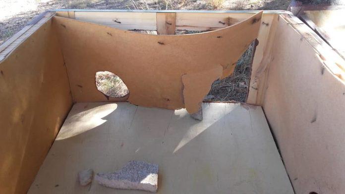 gateras destrozadas spandy destrozos