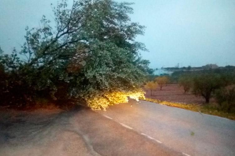 árbol caído lluvias