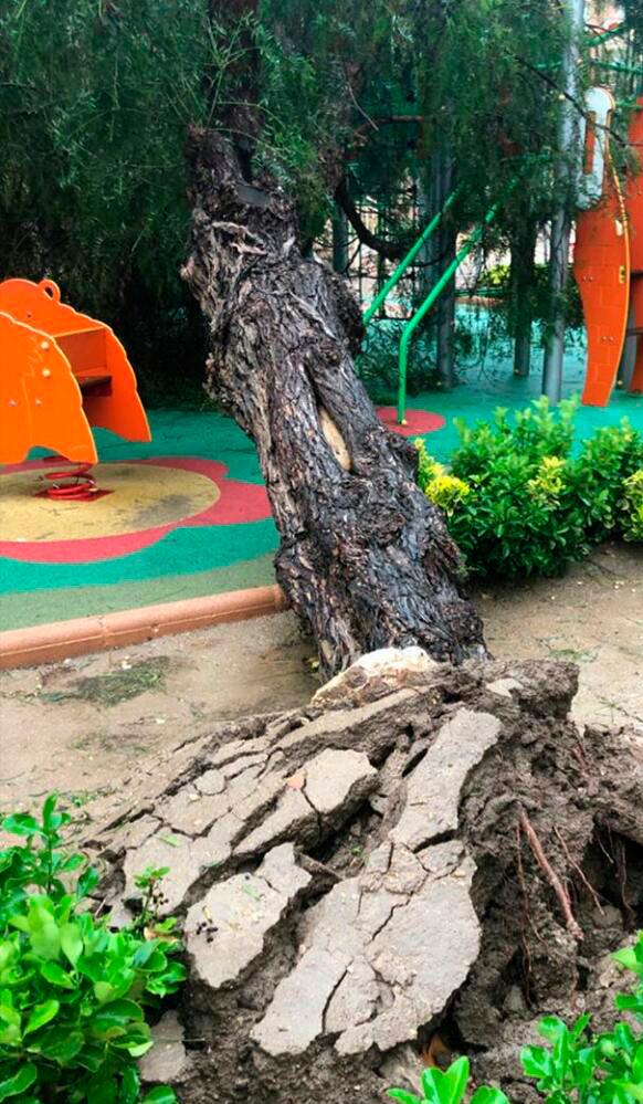 árbol caído parque infantil