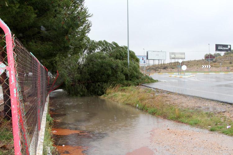 lluvias caída árbol
