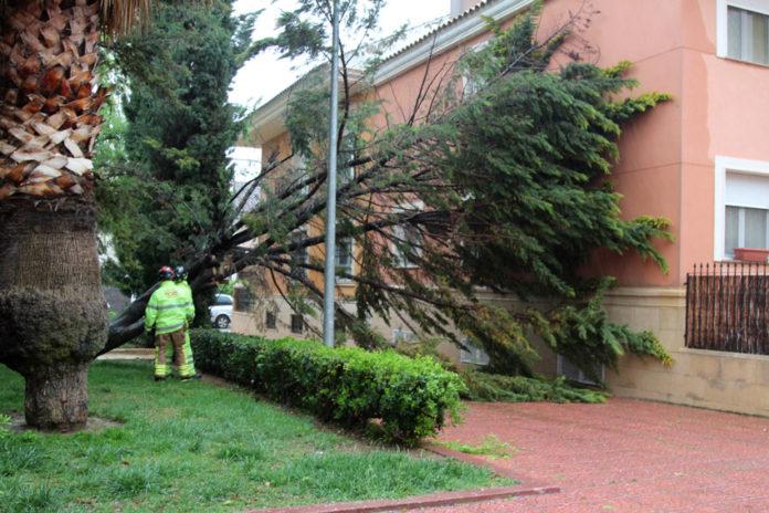 lluvias caida árbol