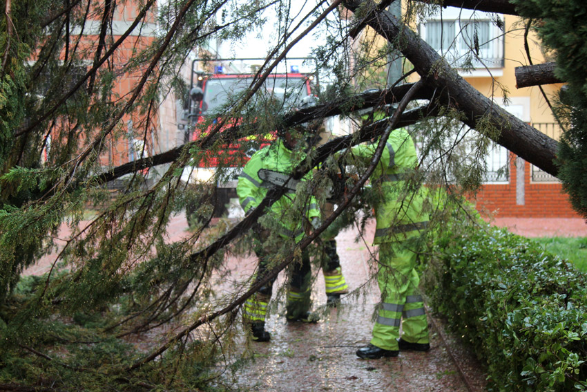 bomberos caída árbol