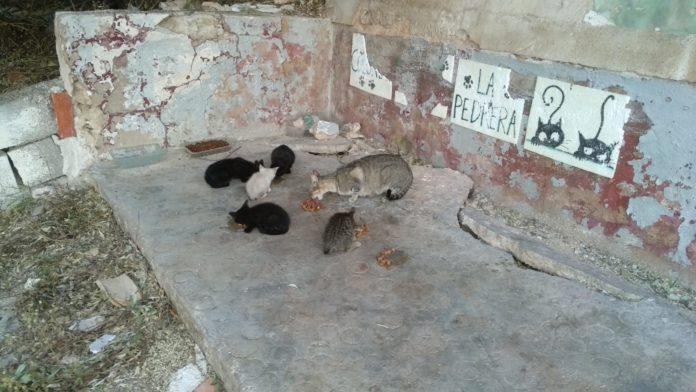 colonia felina gatera de la pedrera destrozos