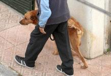 perro pipís en la calle