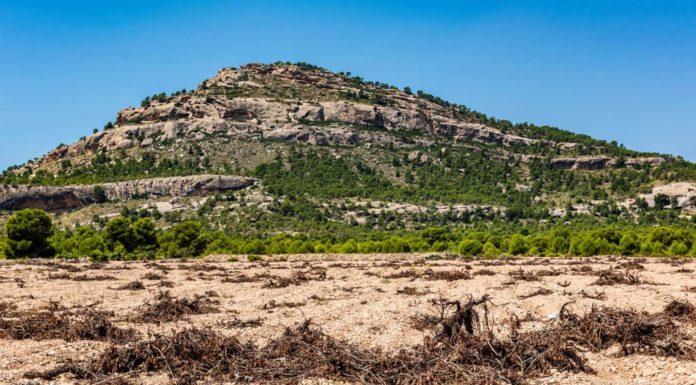 arabí cultivos intensivos