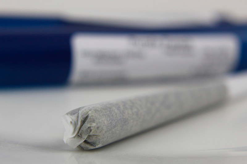 cannabis porro drogas