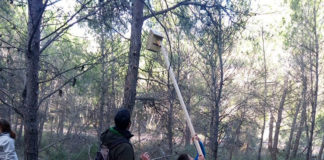 caja-nido