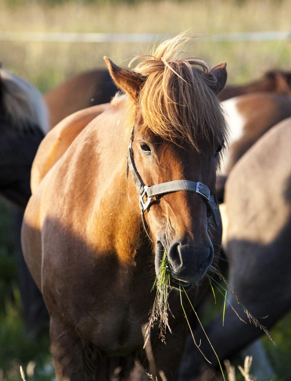 Rufián caballo