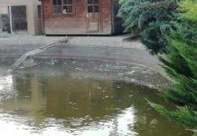 lago del cespín