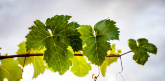 primer beso vino_parra_juan_miguel_ortuno