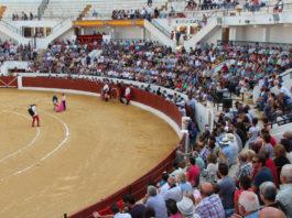 clases prácticas toros festejos taurinos