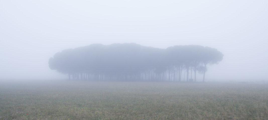 niebla cumpleanos teo carpena