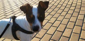 marca canina virtual spandy