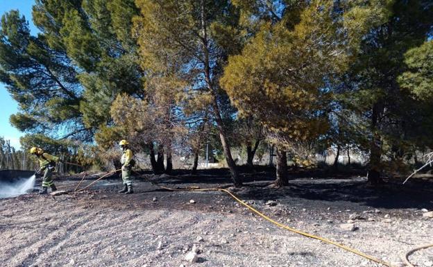 incendio pinada decarada