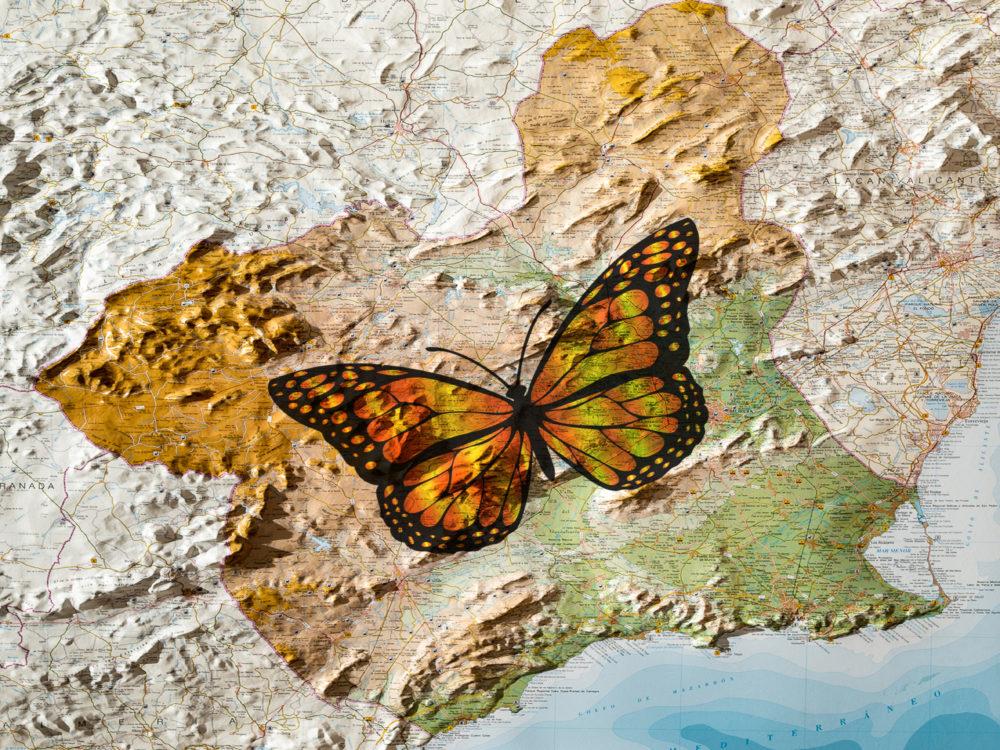 mariposa murciana