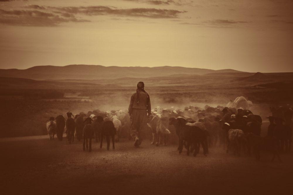 venta ambulante vendedores ambulantes pastores
