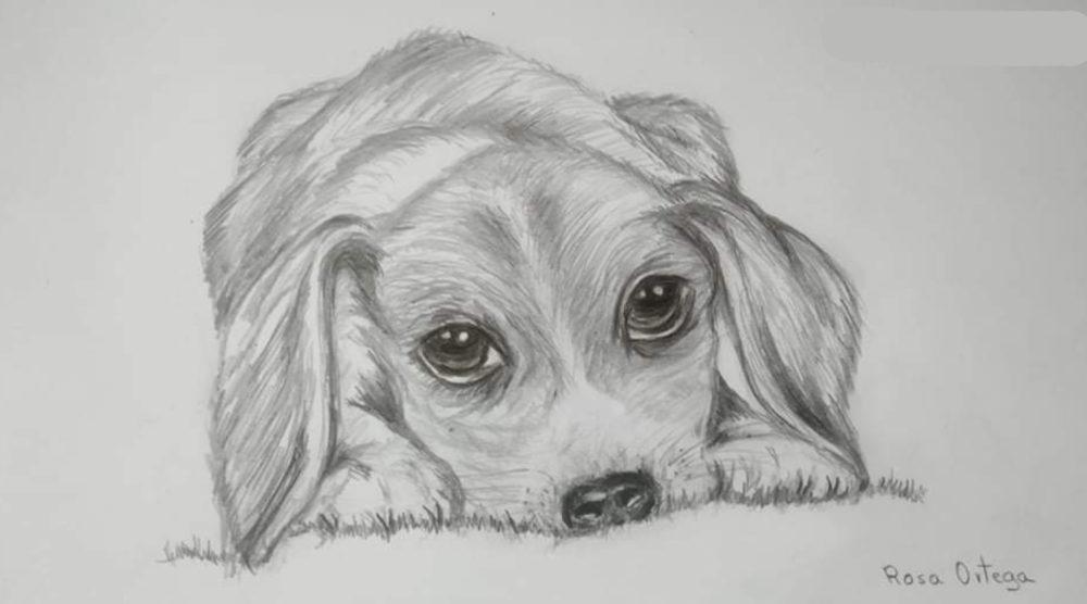 perro-ortega