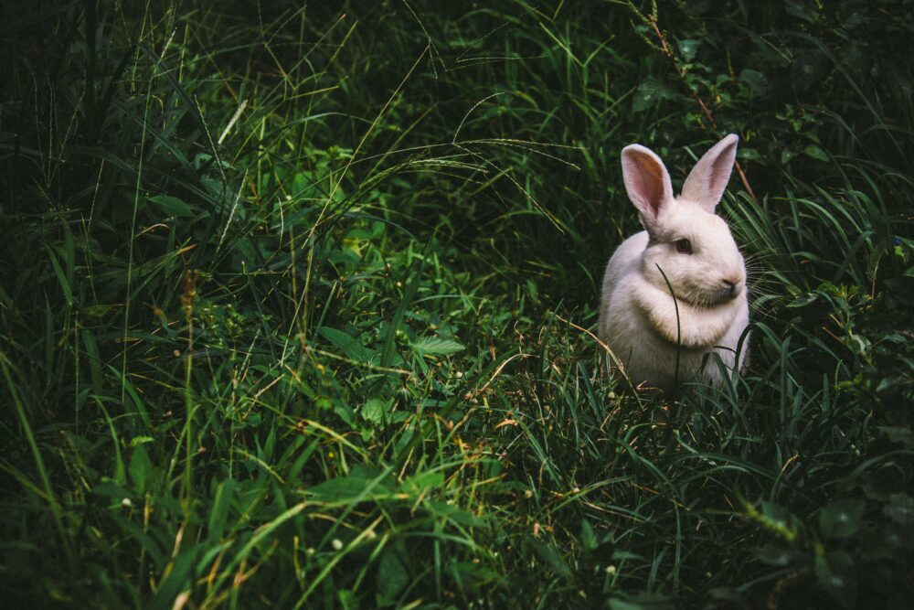 nube relatos conejo
